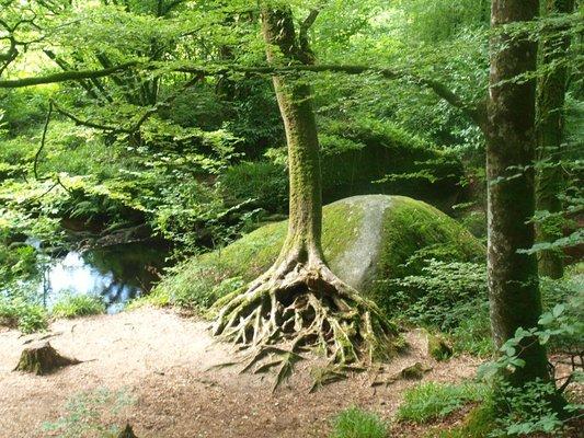 Arbre aux racines 3