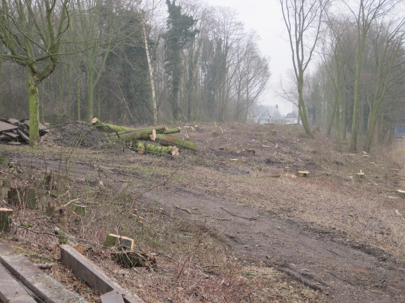 Kaalslag-bonairepark-ii-februari-2012