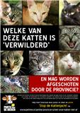 Definitiev poster anti kattenjacht