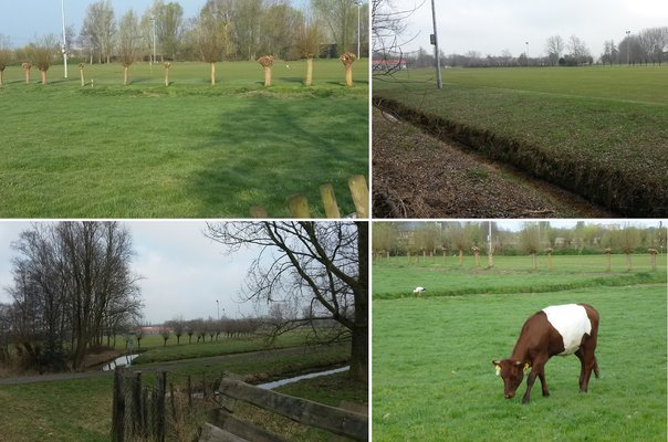Skeelerbaan collage petitie 3