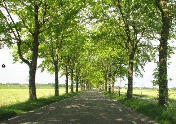 Foto bomen langs weg